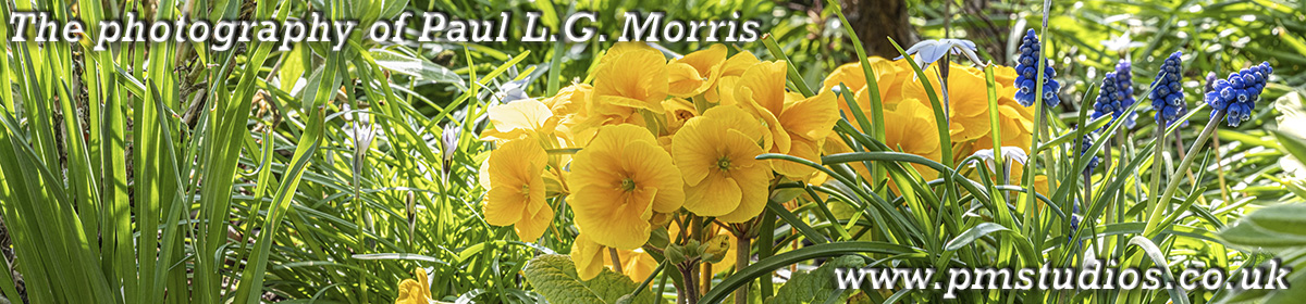 The photography of Paul L.G. Morris
